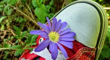 Карпополітен: модне літнє взуття