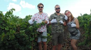 Хеппі Ранок збирав врожай винограду