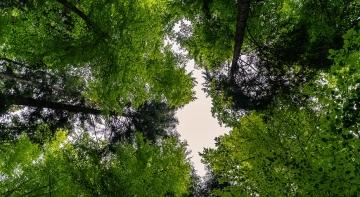 У лісах України оголошено сезон тиші