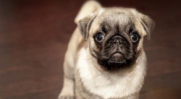 В Україні собака-психолог лікуватиме дітей