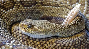 Жінка вбила на своєму обійсті зміюку
