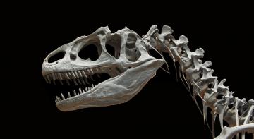 Найбільший скелет динозавра продають за 1,5 млн євро
