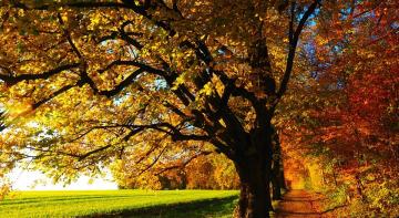 Справи, які варто зробити восени
