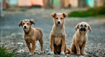 Південна Корея може заборонити їсти м'ясо собак