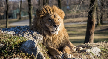 Депутат перевозив лева